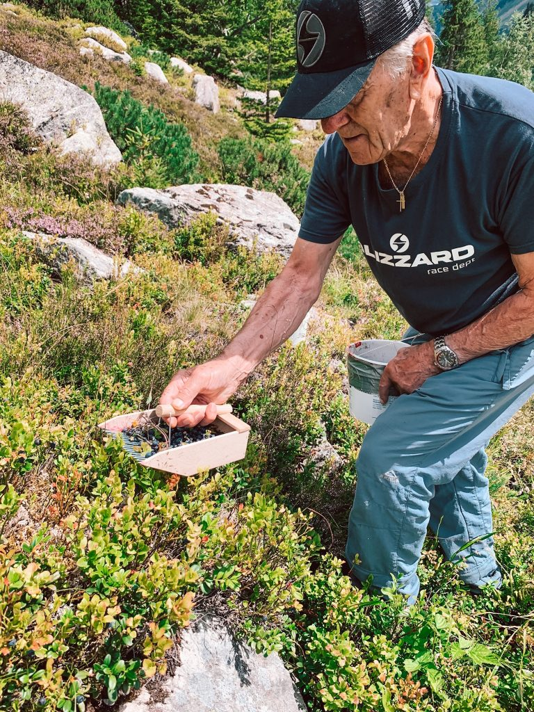 My granddad is collecting blueberries